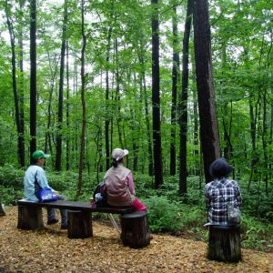 Refreshing and relaxing from hot spring bath to forest bathing