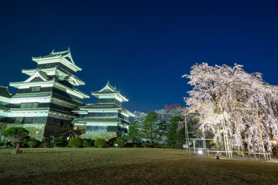 ●松本城と桜