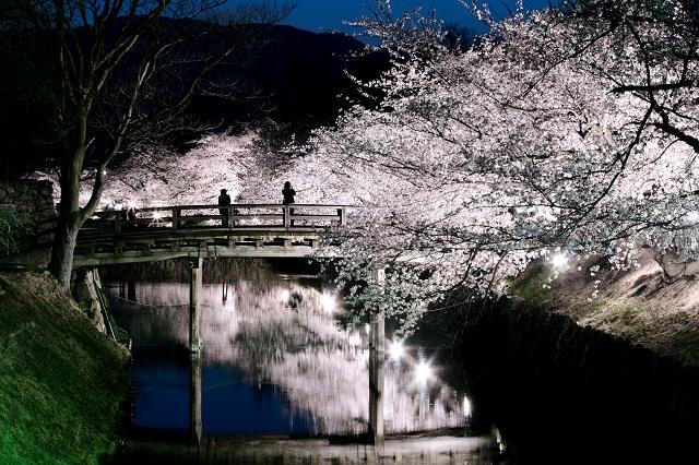 松本城お堀夜桜 2