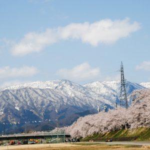 雪山と桜が織り成す絶景