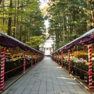 菊で彩られる秋の弥彦村