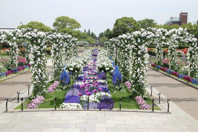 山下公園 未来のバラ軽(横浜)
