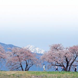 (開催中止)春の松本を愛でながら歩く