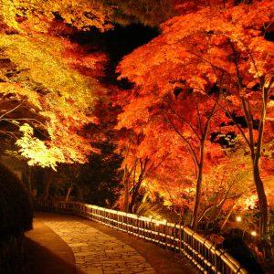 修善寺の街が紅に染まる