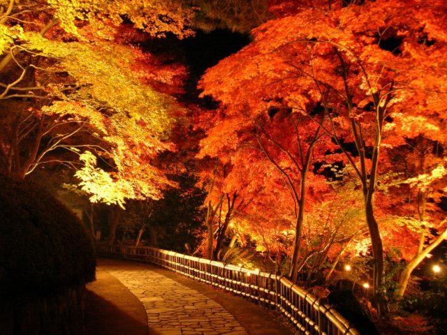 伊豆虹の郷紅葉