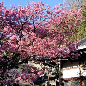 心躍る、一足早い春の訪れ