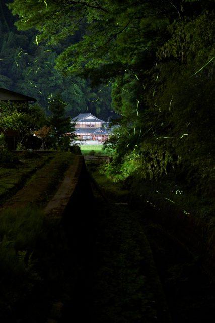池田町 ホタル