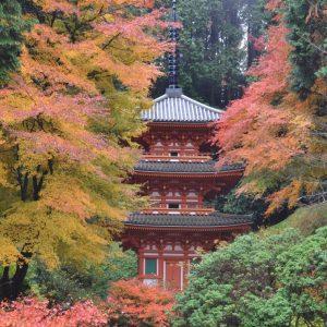 秘宝と出会える秋の特別公開