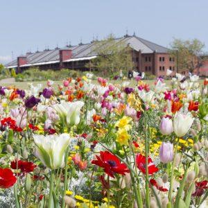 (開催延期)花と笑顔が咲く 春の横浜