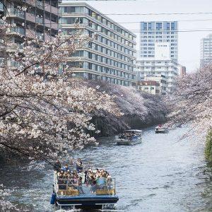 都心で楽しむ目黒川の桜