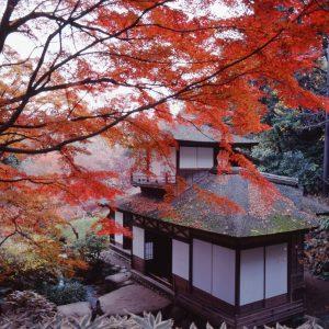 三溪園 紅葉の古建築公開~横浜に秋を聴く。~