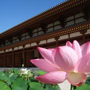 蓮を愛でながらお寺を巡るロータスロード