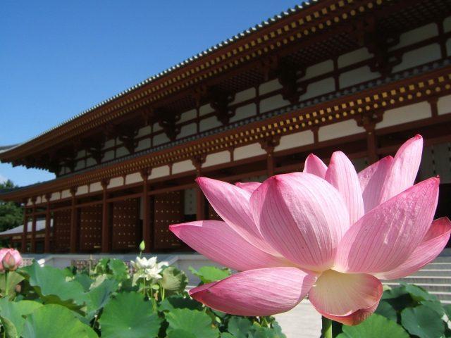 奈良市_薬師寺