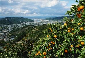 和歌山県有田市